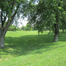 Crothers Park 6